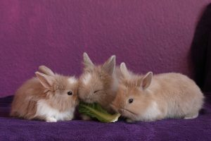 Baby konijnen